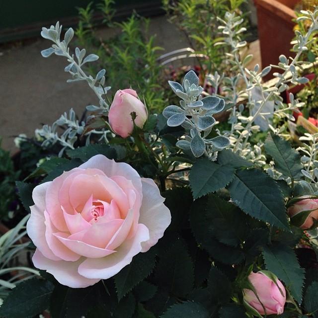地には花.。,:*☆
