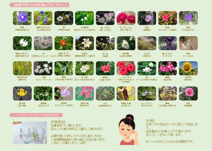 和シリーズ カタログです。