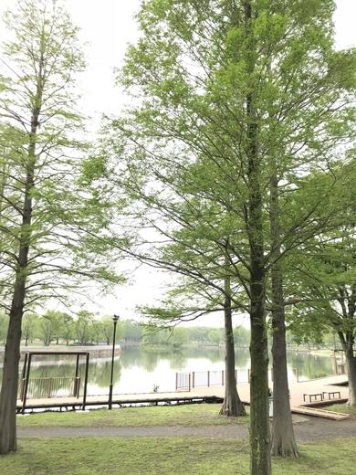新緑の舎人公園