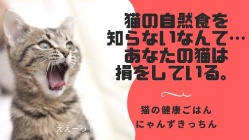 猫の自然食を知らないなんてあなたの猫は損をしている