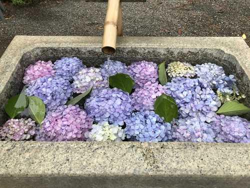 マヤ暦・黄色い人の開運方法(6/29-7/11)